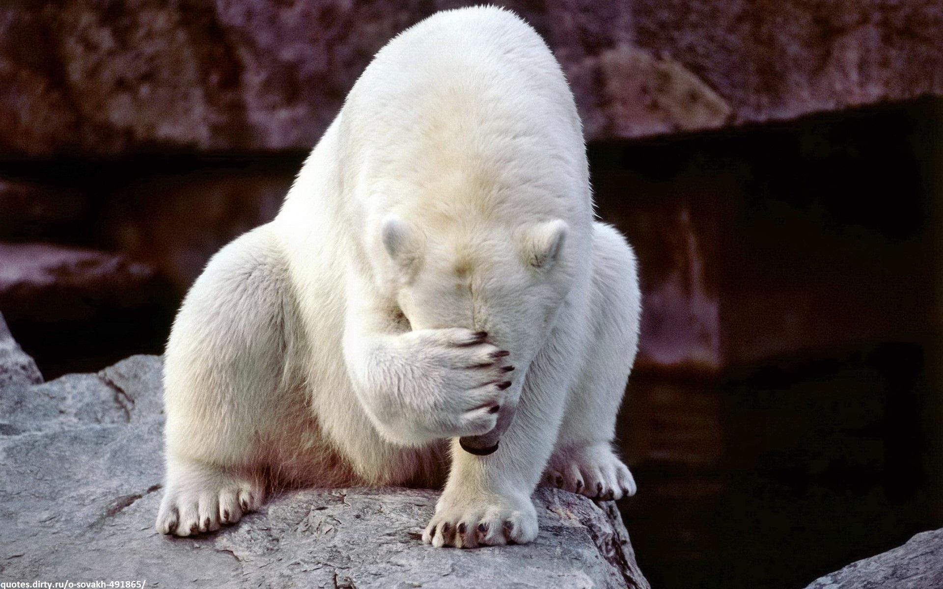 bear shame